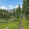 Forest opening up toward Fox Park.- Pawnee and Buchanan Pass Loop