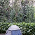 Tent campsite at Rising Sun.- Rising Sun Campground