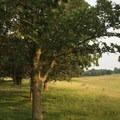 The oak savannah near Jorgen's Hollow.- Jorgen's Hollow Campground