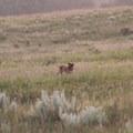 Dog-friendly hiking in Sheyenne National Grassland.- Jorgen's Hollow Campground