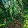 The trail is located at the back of the valley road.- Pu'u Pia