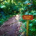 The trail is maintained and marked well.- Pu'u Pia