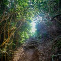 Toward the summit of the hill the trail becomes slightly steeper.- Pu'u Pia