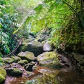 Many pools line the trail and are quite inviting.- Waiakeakua Stream