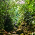 The trail more or less ends with a two-tiered waterfall and pools.- Waiakeakua Stream