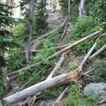 A look back up at the steep section where the trail branches off and the many downed trees that need to be passed.- Delta Lake