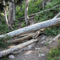 Most of the downed trees are right where the trail branches off toward Delta Lake.- Delta Lake