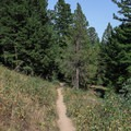 The trail alternates between wide open, exposed hillsides and back into wooded covered sections. There are many convenient opportunities for shade as you climb.- Delta Lake