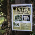 Make sure to keep an eye out for bighorn sheep and mountain goats and document any sightings for the rangers.- Delta Lake