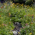 Cascade Canyon is absolutely filled with wildflowers.- Paintbrush Canyon to Cascade Canyon Loop