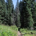 From Lake Solitude, you'll have a few mostly exposed miles of hiking before getting back into dense woods.- Paintbrush Canyon to Cascade Canyon Loop