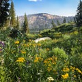 In the summer, alpine wildflowers burst out of the scenery!- Sunrise Lakes