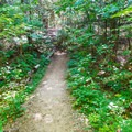 An easy section of trail. - Artists Bluff and Bald Mountain