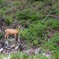 Find wildlife throughout your trip.- Cliff and Wade Lakes