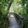 One of the hiking trails adjacent to the campsites.- Leesylvania State Park Campground