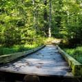 A bridge on one of the hiking trails.- Prince William Forest Park