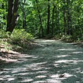 Prince William Forest Park has several gravel biking trails through the forest. - Prince William Forest Park