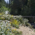Small bridge toward Red Pine Lake.- Lower Red Pine Lake Trail