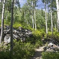 Granite boulders and large apsen.- Lower Red Pine Lake Trail