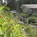 Wild berries along the small creek feeding the lake.- Lower Red Pine Lake Trail