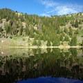 Trees surrounding Stella Lake.- Alpine Lakes Loop