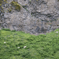 Sheep up on the cliffside.- Seljalandsfoss