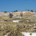 Dunes along the East Lighthouse Trail.- Ludington State Park
