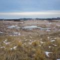 The sand dunes of Ludington State Park.- Ludington State Park