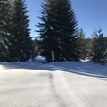 Unmarked trail. GPS is highly suggested.- Ikenick Sno-Park Snowshoe