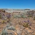 Flowers in bloom in the desert.- Bisti/De-na-zin Badlands