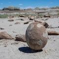 Seemingly a perfect egg at a rock garden.- Bisti/De-na-zin Badlands