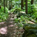 Following the path along an old stone wall.- Molly Stark State Park