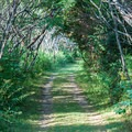 The path to the southern end of the island.- Burton Island State Park