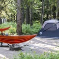 Campsite at Apgar Campground.- Apgar Campground
