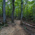 Trail heading west from Cane Creek Overlook.- Gorge Overlook Trail