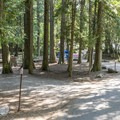 Sprague Creek is a nice little tent campground.- Sprague Creek Campground