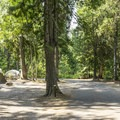 Typical loop road in Fish Creek Campground.- Fish Creek Campground