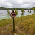 A swimming is prohibited at the pond.- Trap Pond State Park