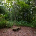 A bench along a trail in the woods.- Trap Pond State Park