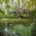 A view of the cypress swamp.- Trap Pond State Park