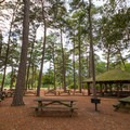 A pavilion with a ring of picnic tables.- Trap Pond State Park