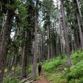 Hike underneath a tall, lush forest.- The Thunderer