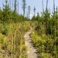Howe Lake Trail.- Howe Lake Trail