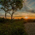 Sandy Hook Beach Trail.- Sandy Hook