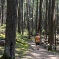 Hiking through the dark forest to Johns Lake.- Johns Lake Loop Hike
