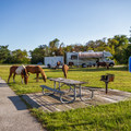 Horses meander through the campground.- Assateague Island Campground