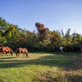 Horses on an empty campsite.- Assateague Island Campground