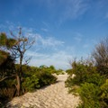 A path to an oceanside walk-in campsite.- Assateague Island Campground