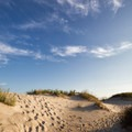 Campsites nestled between the dunes offer privacy.- Assateague Island Campground