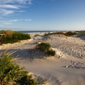 A wide-open campsite.- Assateague Island Campground
